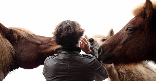 De kracht van directe feedback van paarden