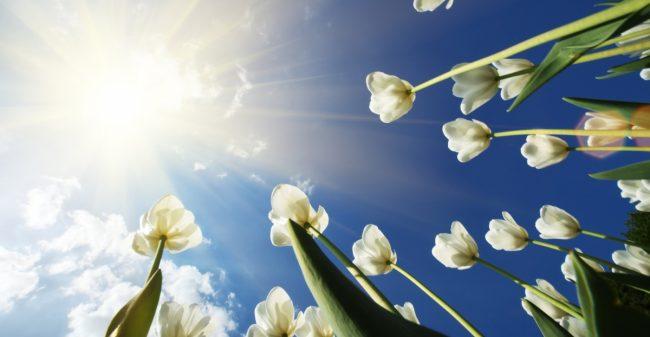 Mindfulness laat je groeien