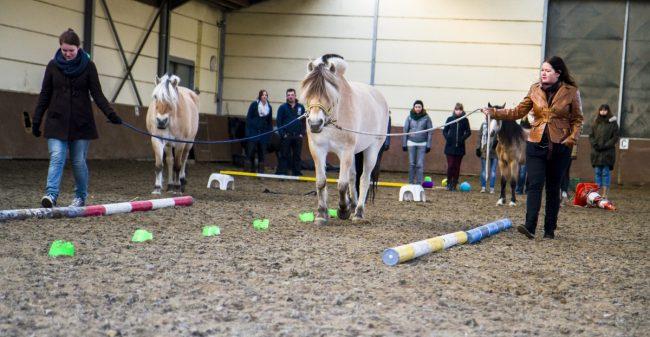 Paarden helpen jou om tegenslag te overwinnen!