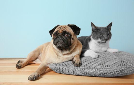 Een huisdier: meer dan brokken en een mand
