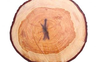 Een mens is als een boomstam