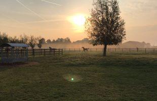 Paarden, uitgestrekte weilanden en rust. Veel rust.