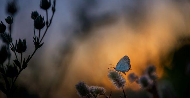 Als alle vlinders zijn weggevlogen …